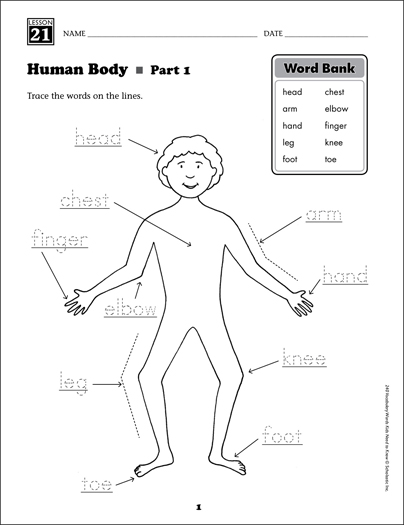 Human Body (Content Words): Grade 1 Vocabulary - Printable Worksheet