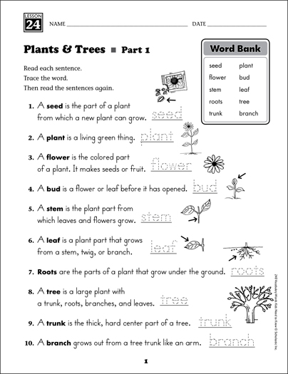 plants and trees content words grade 1 vocabulary printable skills sheets. Black Bedroom Furniture Sets. Home Design Ideas