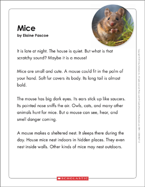 Mice: Text & Organizer - Printable Worksheet