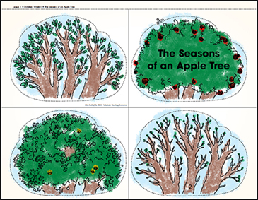 The Seasons of an Apple Tree - Printable Worksheet