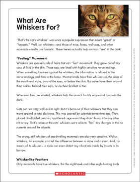 What Are Whiskers For?: Text & Organizer - Printable Worksheet