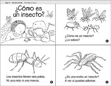 ¿Cómo Es Un Insecto? (What Makes an Insect?) - Printable Worksheet