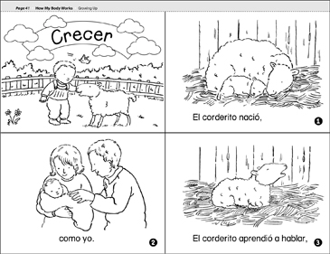 Crecer (Growing Up) - Printable Worksheet