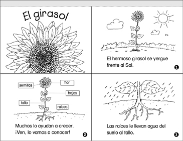 El Girasol (Sunflowers) - Printable Worksheet