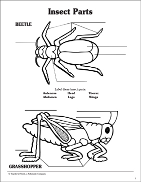 insect parts  labeling activity page