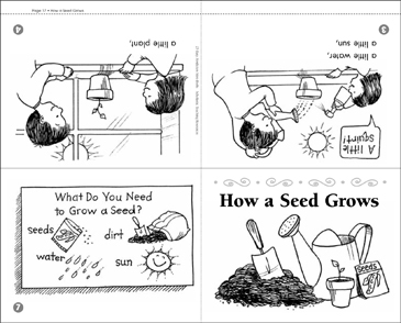 How a Seed Grows - Printable Worksheet
