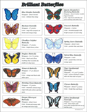 Butterfly Classification Guide - Printable Worksheet