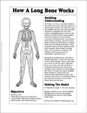 The Long Bones - Printable Worksheet