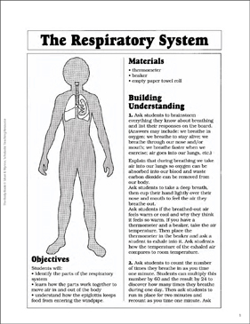 The Respiratory System - Printable Worksheet