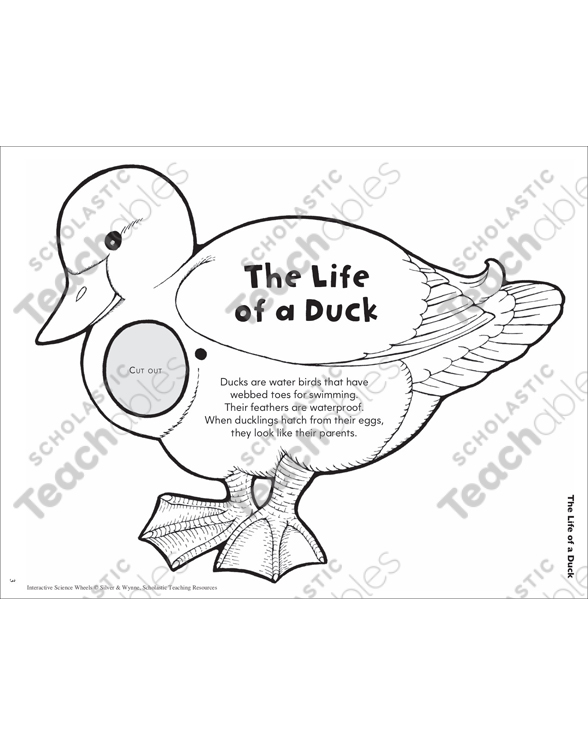 The Life Of A Duck Interactive Science Wheel