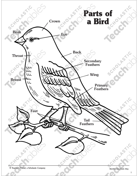 Simple Bird Diagram