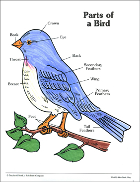 parts of a bird labeling practice page printable skills sheets bird skeleton diagram labeled bird diagram label #5