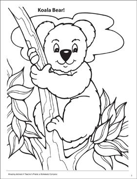 koala amazing animals coloring page