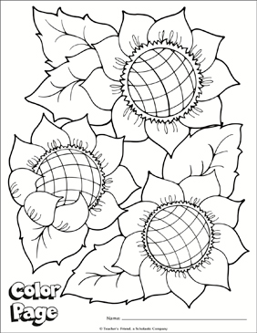Sunflower Color Page | Printable Coloring Pages