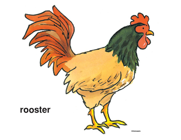 picture about Rooster Printable named Hen Printable Clip Artwork and Shots