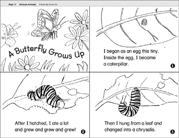 A Butterfly Grows Up - Printable Worksheet