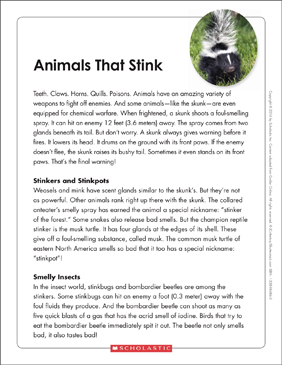 Animals That Stink: Text & Organizer - Printable Worksheet