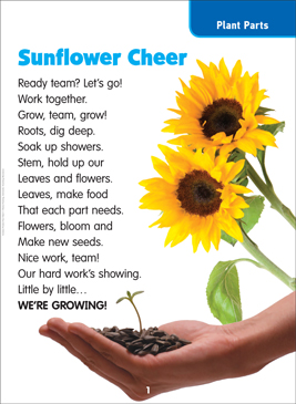 Sunflower Cheer: Science Poem - Printable Worksheet