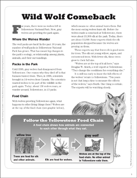 Wild Wolf Comeback: Text Passage - Printable Worksheet