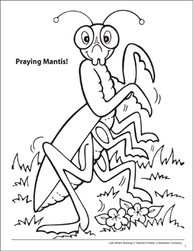 Look What's Buzzing Coloring Page: Praying Mantis - Printable Worksheet