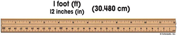 One Foot Ruler - Image Clip Art