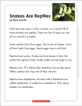 Snakes are Reptiles: Text & Organizer - Printable Worksheet