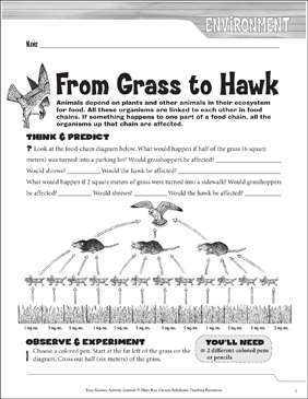 From Grass to Hawk: A Life Science Journaling Activity - Printable Worksheet