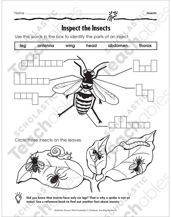 Inspect the Insects (Labeling) | Printable Skills Sheets