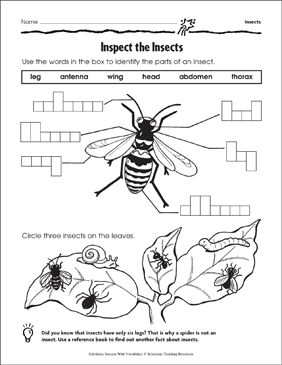 Inspect the Insects (Labeling) - Printable Worksheet