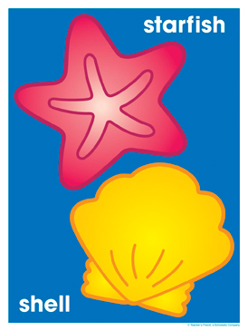 Starfish and Shell - Image Clip Art